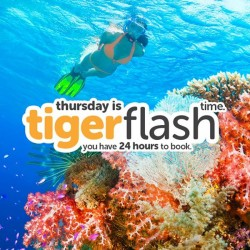 Tigerair: Thursday is Tigerflash Time---Only Have 24HR To Book
