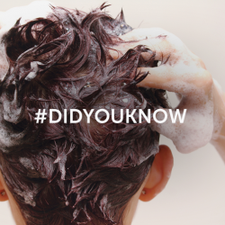 [Svenson] If you've been exercising to balance out the holiday feasts, here's a tip - You should shampoo twice after