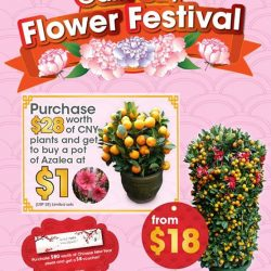 [Gain City] Here at the Gain City Flower Festival you'll be able to get a pot of Azalea plants at only $