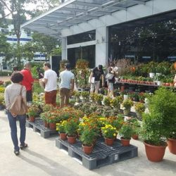 [Gain City] Get your CNY plants here at the Gain City Megastore @ Sungei Kadut this weekend!