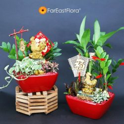 [Far East Flora] Usher in a year of abundance with our range of  Table Gardens. (From $98) Available at all retail