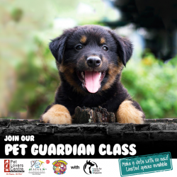 [Pet Lovers Centre Singapore] The Pet Guardian Class is a fun-packed hour of play, storytelling and outdoor interaction with pets!