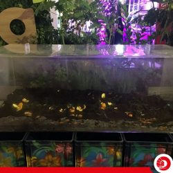 [OCBC ATM] We participated in The Fantastical World of eco.