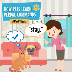 [Pet Lovers Centre Singapore] When teaching your pets to follow verbal commands, keep it short and uncomplicated!