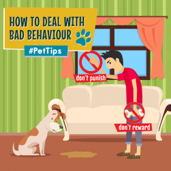 [Pet Lovers Centre Singapore] Be careful not to send mixed signals to your pet by giving them a treat or food soon after bad