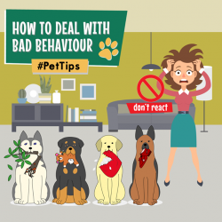 [Pet Lovers Centre Singapore] It may sound counter-intuitive, but ignoring a bad behaviour can cause this behaviour to go extinct.