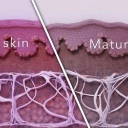 [CSK® Aesthetics] What happens when our skin ages?