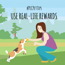 [Pet Lovers Centre Singapore] PLCPetTips - Slowly replace food treats with real-life rewards like more playtime or petting.