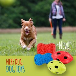 [Pet Lovers Centre Singapore] NERF DOG offers a wide range of canine retrieving toys that vary in size and materials.