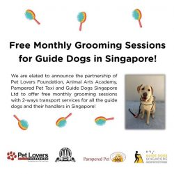 [Pet Lovers Centre Singapore] Guide Dogs are such clever, loyal and heroic creatures, wouldn't you agree?