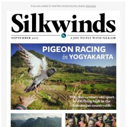 [Singapore Airlines] Pigeon racing in Yogyakarta | Stunning landscapes in northern Vietnam | Wuhan's blossoming art scene