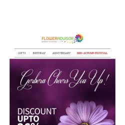 [Floweradvisor] Up To 26% OFF for These Special Gerberas