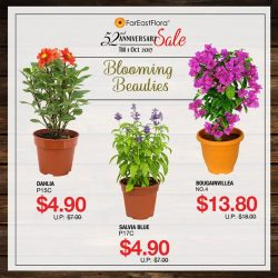[Far East Flora] Lovely potted blooms now on sale!