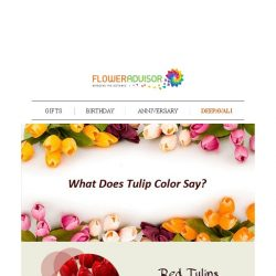 [Floweradvisor] FLOWERPEDIA: Colors of Tulip Carried Different Meaning. Find Out Here!