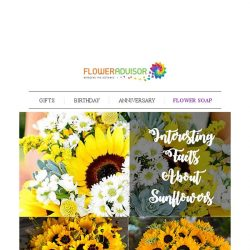 [Floweradvisor] FLOWERPEDIA: 6 Interesting Facts About Sunflowers You Never Know Before