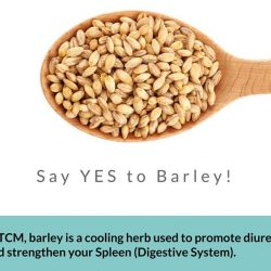 [Aimin Acupuncture & Weight Loss Centre] Tip Of The Day: Say YES to Barley!