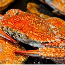 [Orchard Central] The crabs are back in town!