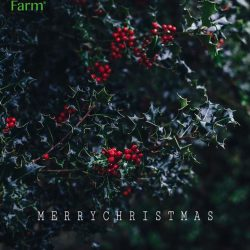 [Nature's Farm] May the season warm our souls, bring love to our hearts, and bless us with everything this life has to