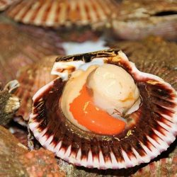 [Eu Yan Sang] DidYouKnow about these health benefits of scallops?