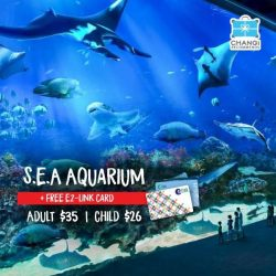 [Changi Recommends] Take a peek into the ocean at the S.