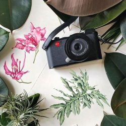 [Leica] This exclusive three-hour botanical art and photography workshop will be centred around the vibrant festive blooms of the spring