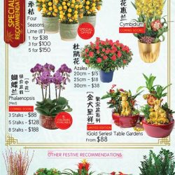 [Far East Flora] Blooming plants and fruits hold special significance during the Chinese New Year, as it is customary for the Chinese to