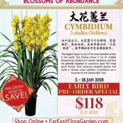 [Far East Flora] Save more when you get yourselves these striking golden blooms at our Early Bird Special Price!