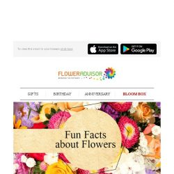 [Floweradvisor] FLOWERPEDIA: Find Out Fun Facts About Roses, Sunflowers and Tulips