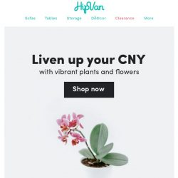 [HipVan] Shop CNY plants and flowers from $13.80!🌺